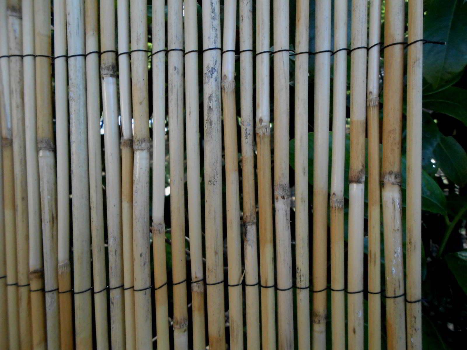 Canne di bambù ecosia